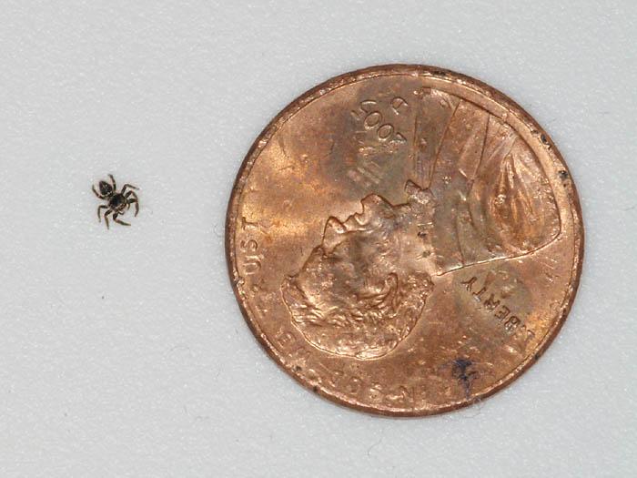 DSCF5444_tiny_spider_penny_sm.jpeg